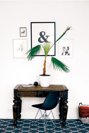 Tropical Plant with Modern Framed Photographs
